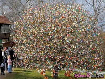10000 Lieldienu olas kokā.
