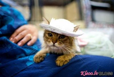 Kaķu modes parāde.