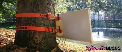 Soliņš uz koka.