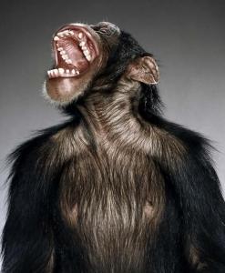 Jill Greenberg и её обезьяны