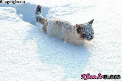 No kaķu dzīves!