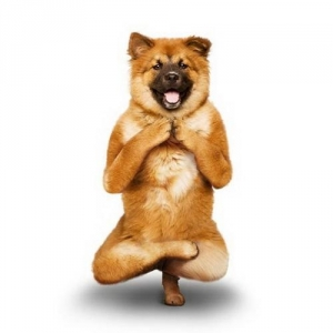 The Yoga Dogs Calendar
