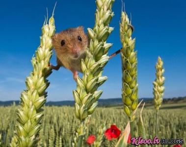 Lauku peles dzīve.
