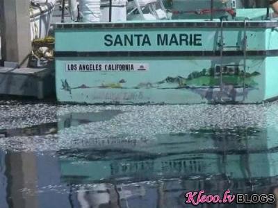 В Калифорнии произошла массовая гибель рыб