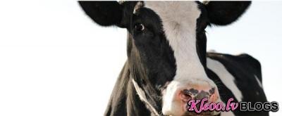 Китайские коровы будут давать человеческое молоко
