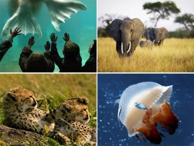 National Geographic: Nedēļas fotogrāfijas