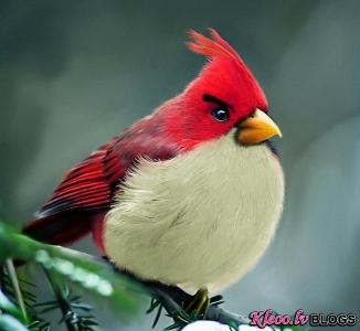Pavisam reāli Angry Birds.