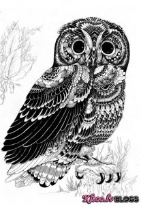 Iain Macarthur ilustrācijas.