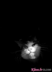 Kaķi uz skanera.