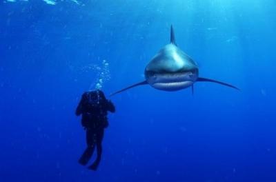 Красота подводного мира Брайана Скерри