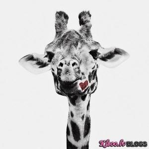 Dzīvnieku fotogrāfs Jon Bertelli.