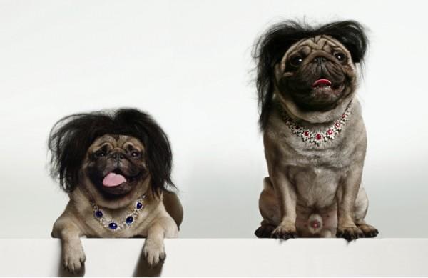 torkil-gudnason-dogs-1-600x393.jpg