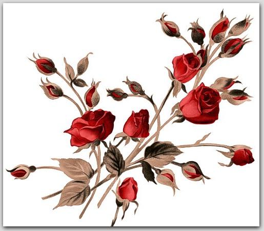 Dārza puķes: no galotnes līdz saknītei