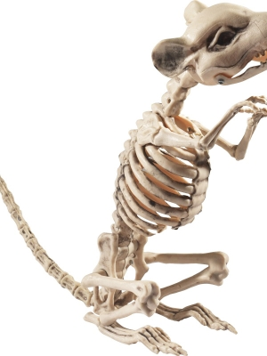 Žurkas skelets, 9 cm x 28 cm x 33 cm