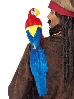 Papagailis, 50 cm