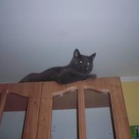mans kaķītis, Mr Noris