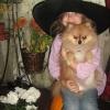 mani mazie Helovīnos (2010)